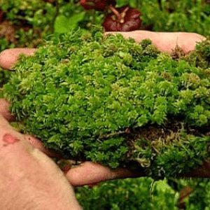 Penjelasan Karakteristik Kingdom Plantae Dalam Biologi