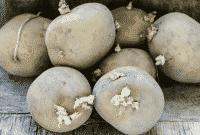 """""""Radioaktif"""" Definisi & ( Efek Bagi Kesehatan – Manfaat Di Bidang Pertanian )"""