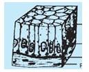 Gambar Epitel silindris selapis